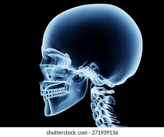 x-ray skeleton r�¶ntgen on black leonardo da vinci