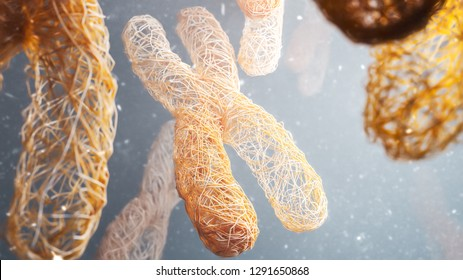 XY Chromosomes - Close-up -- 3D Rendering