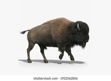 yack animal 3d modelling render image