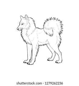 Yakutian Laika. Hand drawn illustration with russian dog breed.