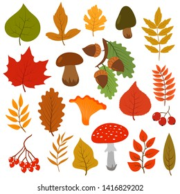 Yellow autumn leaves, mushrooms and berries. Fall forest elements cartoon collection isolated on white background. Autumn leaf and foliage, ashberry colored illustration