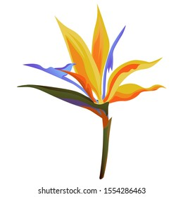 Yellow bird of paradise Strelitzia. Illustration. Isolated illustration element. Floral botanical flower. Wild leaf wildflower isolated. Exotic tropical hawaiian jungle.