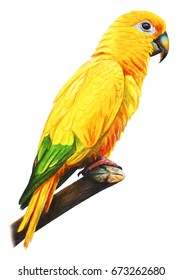 Yellow brazilian parrot drawing (Guarouba guarouba)