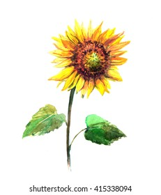 Yellow, bright sunflower isolated on white background. Watercolor painting.