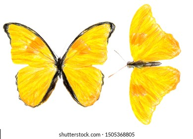 yellow butterflies isolated on white background. crayon