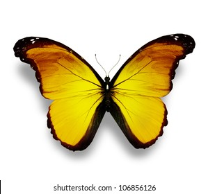 Yellow butterfly, isolated on white