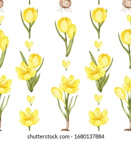 yellow crocuses pattern. watercolor crocuses, crocus flowers, crocus bud, petals isolated on a white background. drawing for fabric. floral print
