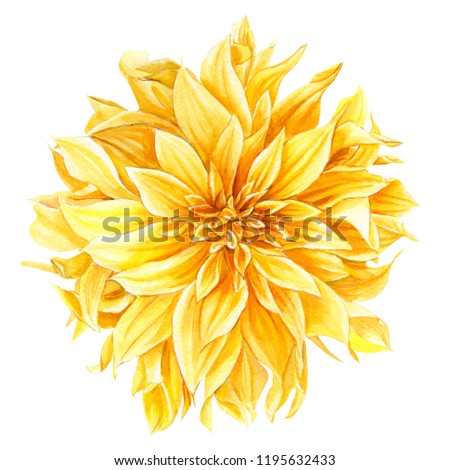 yellow dahlia flower on