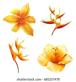 Yellow Exotic Flowers Drawing On Black Stock Illustration 687352132