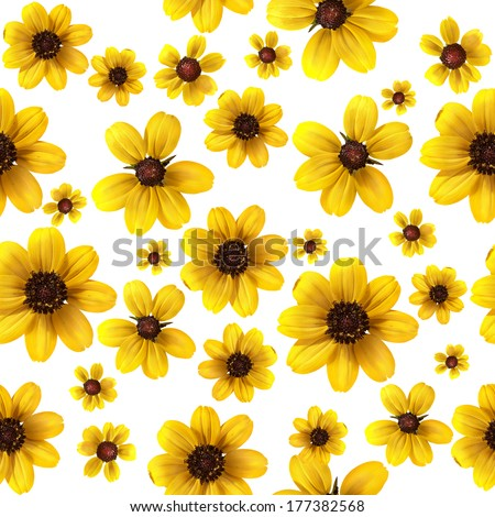 Royalty Free Stock Illustration Of Yellow Flowers On White