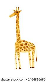 Yellow giraffe .Watercolor hand drawn illustration.White background.African animals illustration.