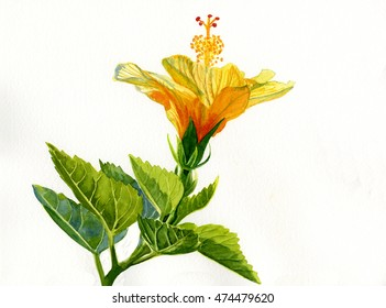 Hibiscus Leaves Images Stock Photos Vectors Shutterstock