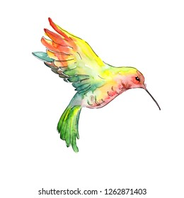 Yellow green colibri in a wildlife. Wild freedom, bird with a flying wings. Watercolor background illustration set. Watercolour drawing fashion aquarelle. Isolated hummingbird illustration element.