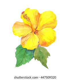 Yellow hibiscus drawing images stock photos vectors shutterstock yellow hibiscus flower watercolor mightylinksfo
