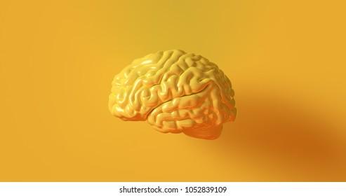 Yellow Human brain Anatomical Model 3d illustration 3d rendering
