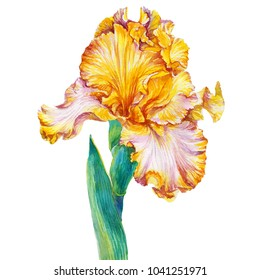 Fleur De Orange Images Stock Photos Vectors Shutterstock