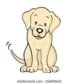 Yellow labrador dog Isolated
