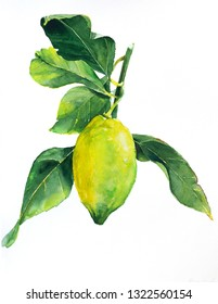 Yellow lemon with leaves. Fruit illustration. Bright print for fabric or wallpaper. Vibrant juicy ripe citrus fruit