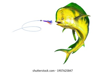 Yellow мahi mahi or dolphin fish attacks bait sea swim squids skirt. Realistic illustration of mahi-mahi or dolphin fish on white background isolate.