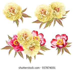 Yellow and red peonies flower watercolor illustration background