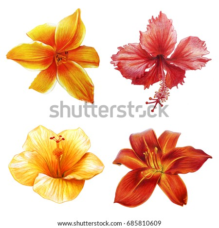 Yellow Red Tropical Flowers Stock Illustration Royalty Free Stock