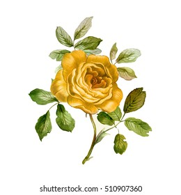 Yellow rose in watercolor. Branch of beautiful rose  Hand painted  botanical illustration.