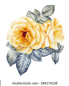 Yellow roses watercolor illustration