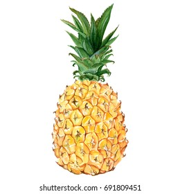 Yellow sweet pineapple. Watercolor drawing isolated on white background.