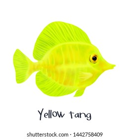 Yellow Tang Fish Realistic Illustration