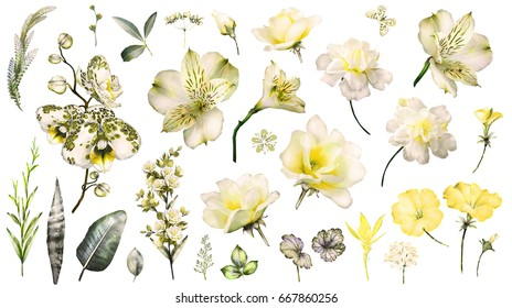 Yellow Tropical Collection with plants elements - leaf, flowers. Botanical illustration isolated on white background. watercolor floral nature. Exotic set with  orchid, hibiscus.