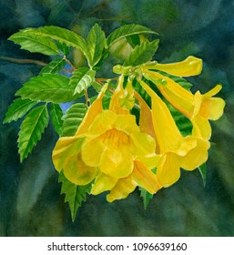 yellow trumpet flower dark background watercolor painting tropical