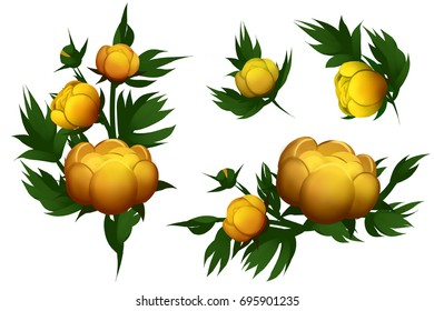 Yellow water lilies isolated on the white background. Set of different beautiful floral design elements. Raster illustration.
