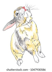A yellow, white, and grey dwarf bunny looking up.