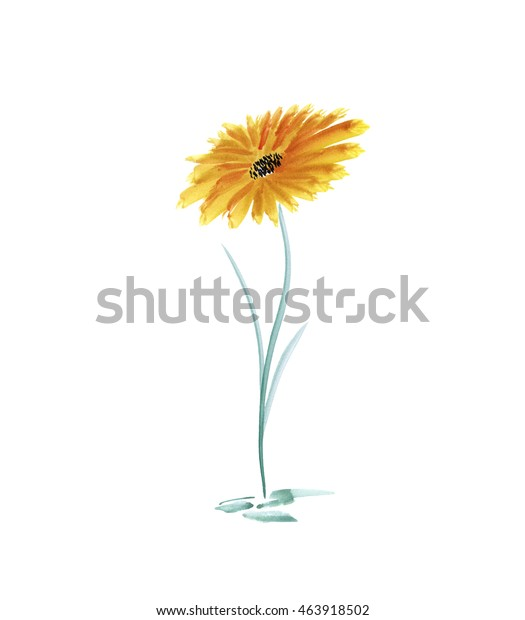 Yellow wild flower / Watercolor painting. Abstract summer plant on a background white. Isolated.