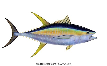 Yellowfin tuna (Thunnus albacares) illustrated by Steven Russell Smith isolated on a white background.