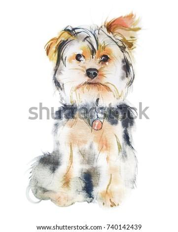 Yorkshire Terrier Dog Illustration Watercolor Stock Illustration