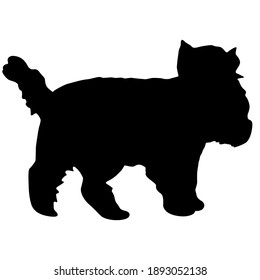 Yorkshire Terrier dog silhouette on a white background.