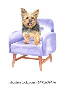 Yorkshire terrier of a dog. Watercolor hand drawn illustration. Watercolor Yorkshire terrier stand on sofa chair layer path, clipping path isolated on white background.