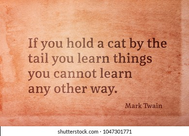 If you hold a cat by the tail you learn things you cannot learn any other way - famous American writer Mark Twain quote printed on vintage grunge paper