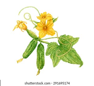 Cucumber Leaves Images, Stock Photos & Vectors | Shutterstock