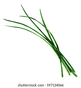 Young green fresh chives bunch isolated, watercolor illustration on white