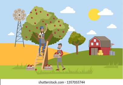 Young happy female farmer standing on the ladder and picking red apples from a huge apple tree. Male farmer collecting apples in a box. Summer in the countryside.  flat illustration