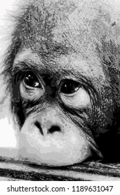 A young orangutan with his upper lip on a wooden board. Black-and-white