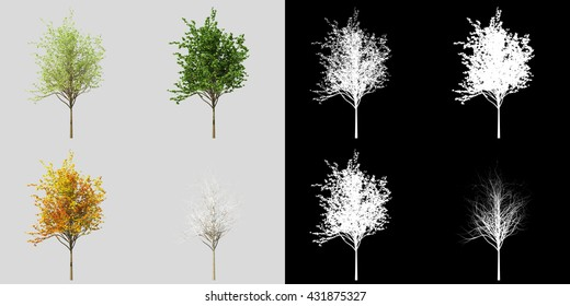 Young realistic generic tree isolated on a light background in four seasons. 3d rendering set along with alpha matte
