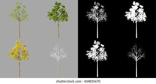 Young realistic generic tree isolated on a grey background in four seasonal versions. 3d rendering set along with alpha matte