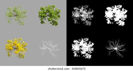 Young realistic generic tree isolated on a grey background in four seasonal versions, top view. 3d rendering set along with alpha matte