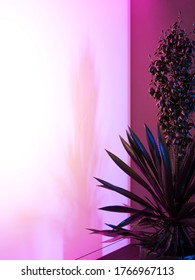 Yucca flaccida houseplant in a pot against the wall. Cool pink, blue lighting. 3d illustration