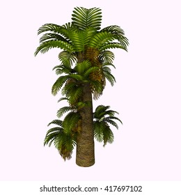 Zamites Tree 3D Illustration - Zamites is a genus of fossil tree known from the Mesozoic of North America, Europe and India through the Oligocene of North America.