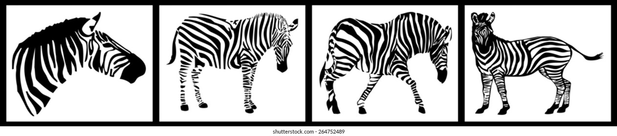 Zebra collection on white background