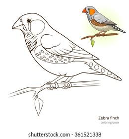 Zebra Finch Bird Learn Birds Educational Game Coloring Book Raster Illustration